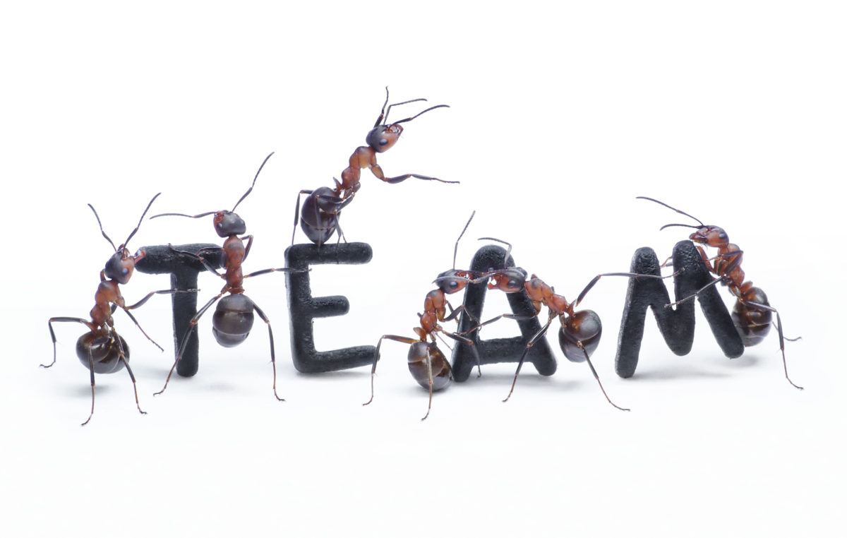 Teamets suksess foran egen